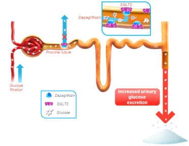 metformin glibenclamide per perdita di peso