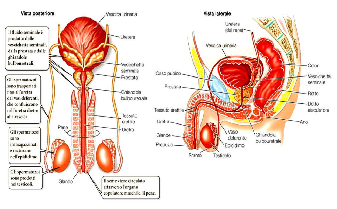 granuli grossi e prostata