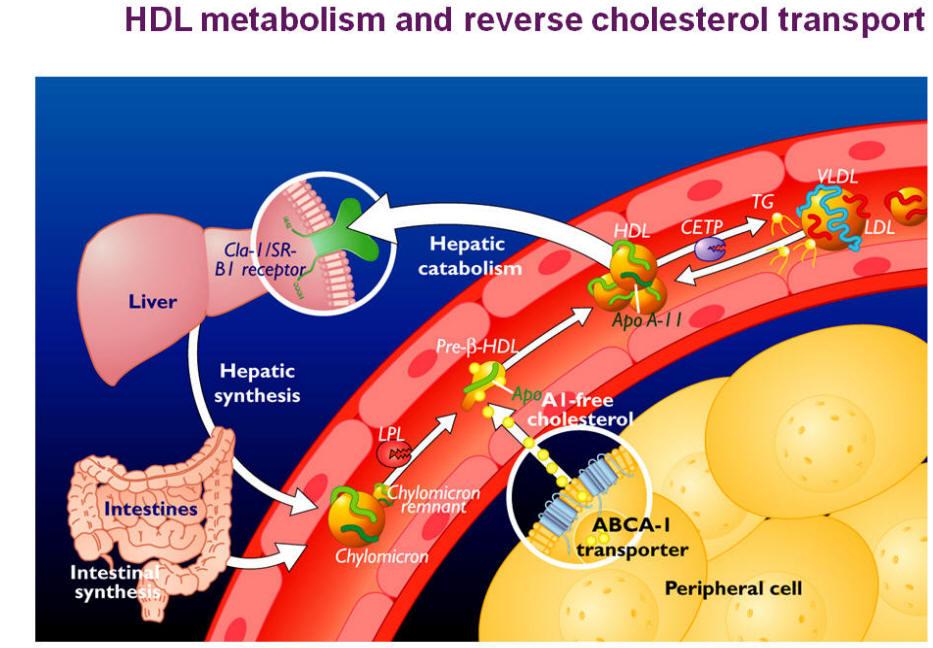 dieta per ipercolesterolemia pura